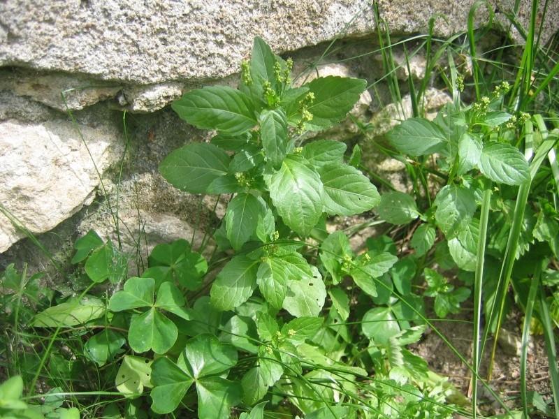 Plantes ds mon jardin utilisable pour nourrir les tortues for Plante ornementale jardin