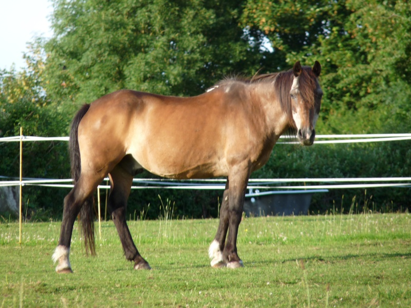 Dur e de vie moyenne d 39 un poney - Duree de vie d un frigo ...