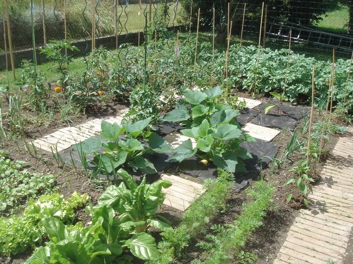 Le potager du roi crazybee page 3 au jardin forum de jardinage - Comment congeler les courgettes du jardin ...