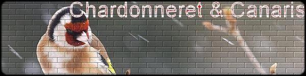 Forum de chardonneret