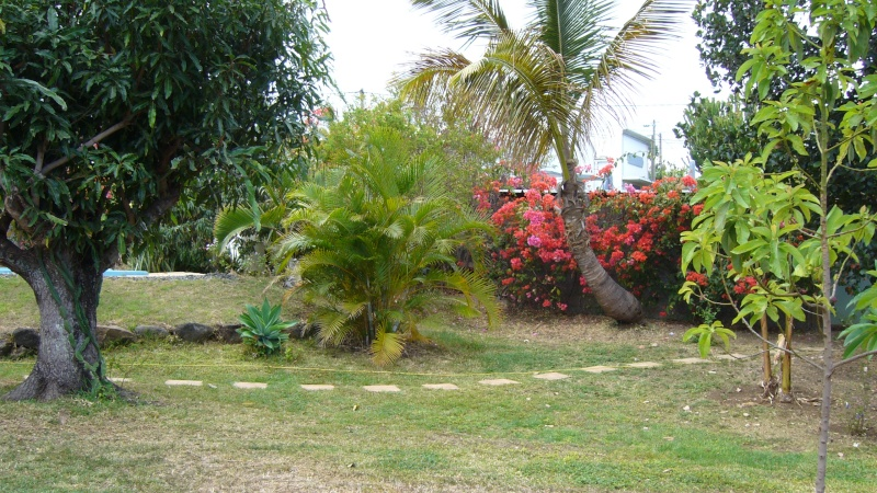 Jardin L 39 Ile De La R Union: entretien jardin ile de la reunion