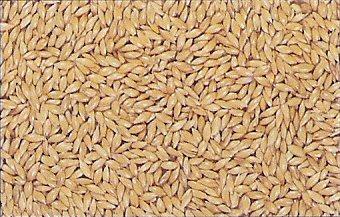 Les graines oiseaux club du pays d 39 herbauges - Distributeur de graines pour oiseaux ...