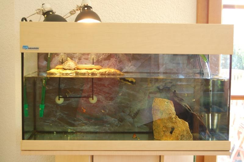 Gofor 39 s aquarium for Aquarium tortue aquatique