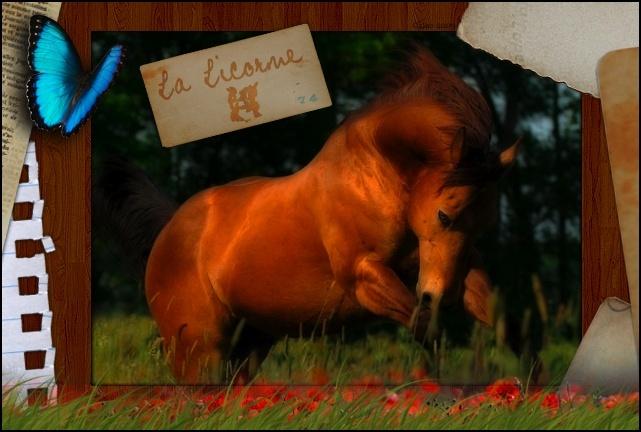 x Domaine de la Licorne .