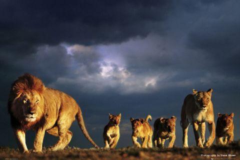 Safari Kingdom