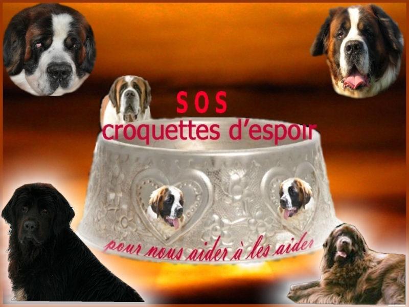 CROQUETTES D ESPOIR