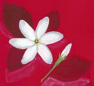 Dessins tous les messages sur dessins page 12 journ es bretonnes - Fleur de tiare dessin ...