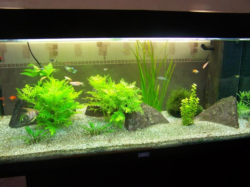 mon aquarium d eau douce