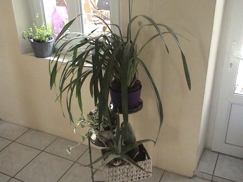 comment la faire refleurir cette orchid e. Black Bedroom Furniture Sets. Home Design Ideas