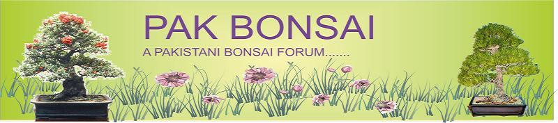 Pak Bonsai Forum.