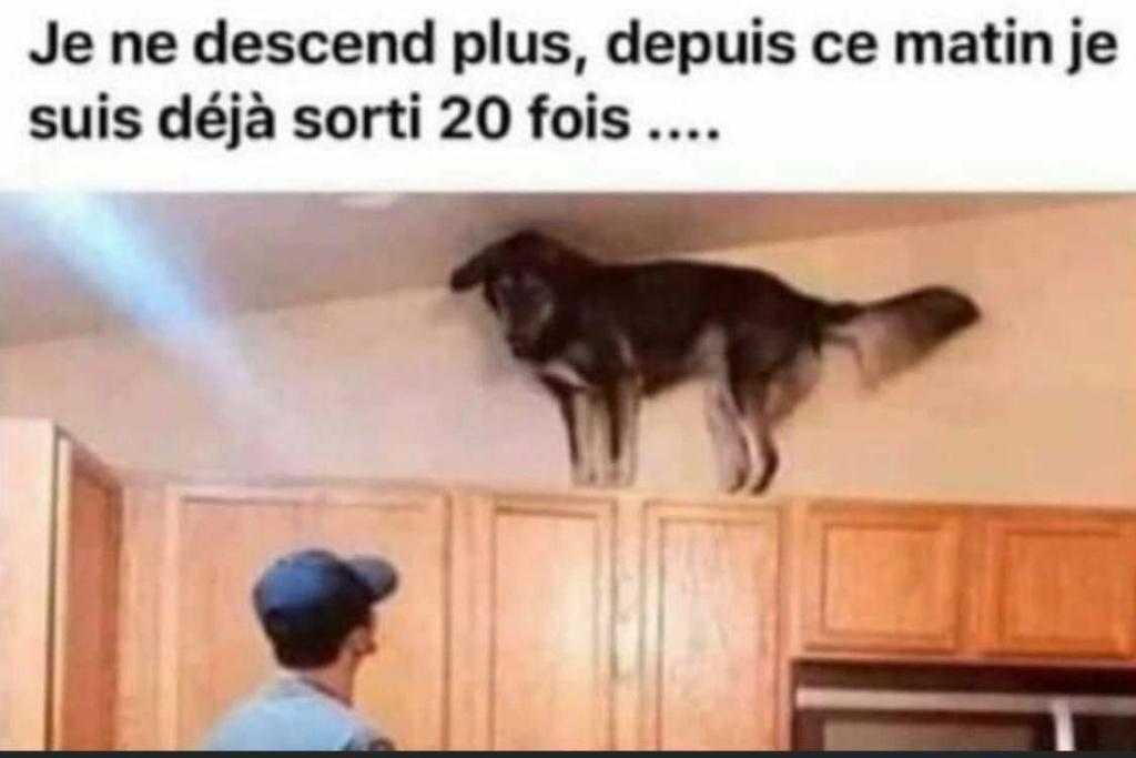 chien10.jpg
