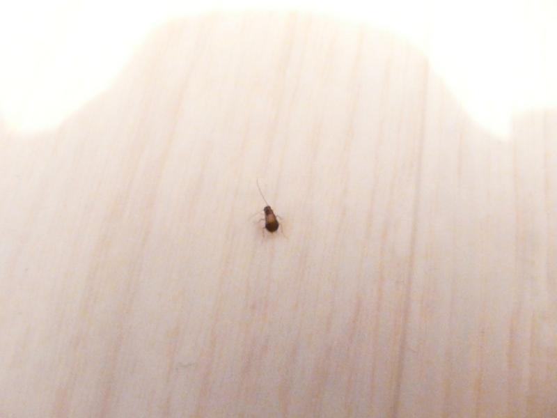 Demande Identification Insecte - Insecte humidite salle de bain